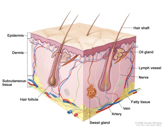 The Anatomy Behind Aging Skin Live Ultra Healthy